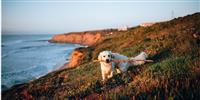 The best dog-friendly beaches in Cornwall