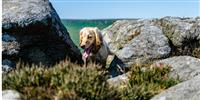 Dog-friendly cottages in the Peak District