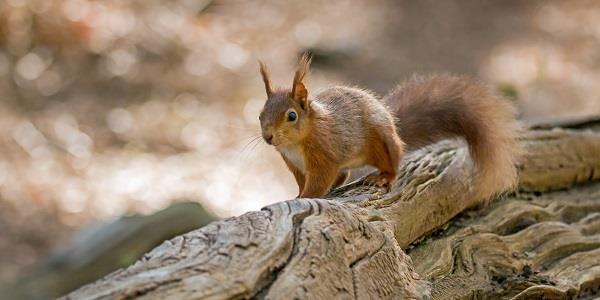 Brownsea Island in Dorset is home to a huge array of wildlife